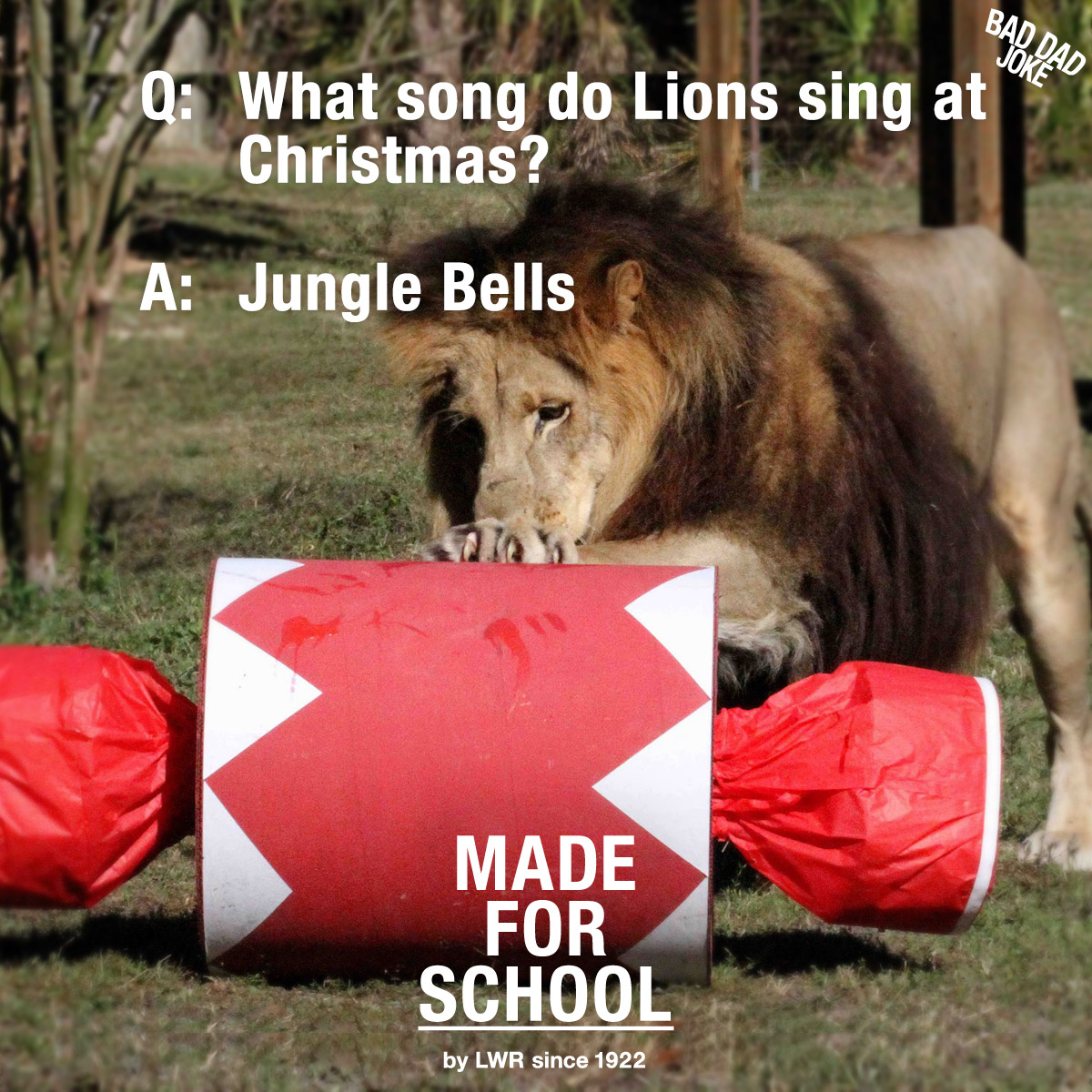 Bad Christmas Jokes.Bad Dad Joke What Do Lions Sing At Christmas Made For School