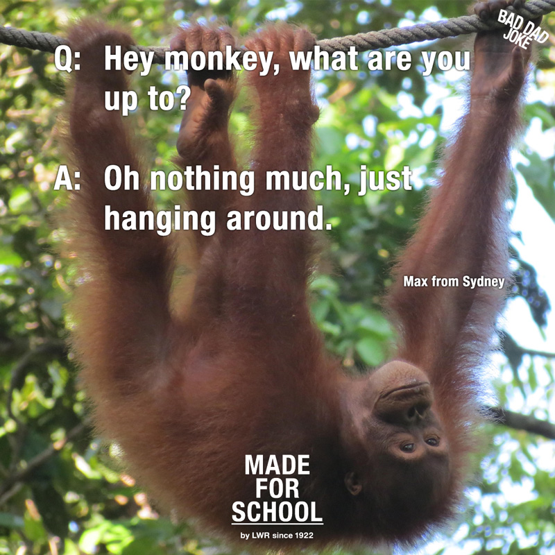 Bad Dad Joke: Hey Monkey