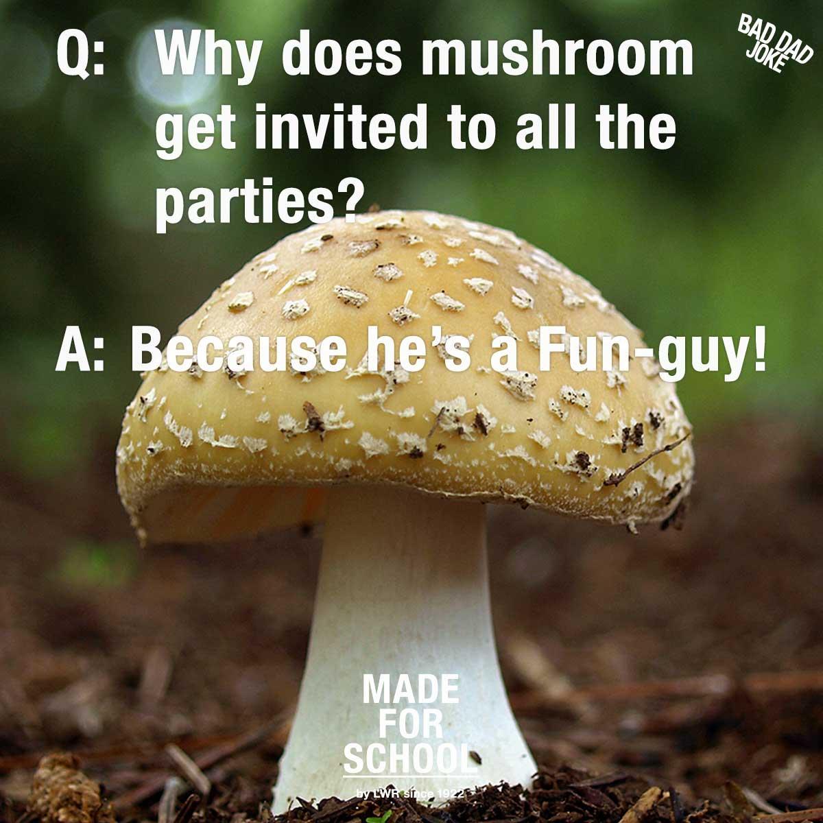 Popular Fungi