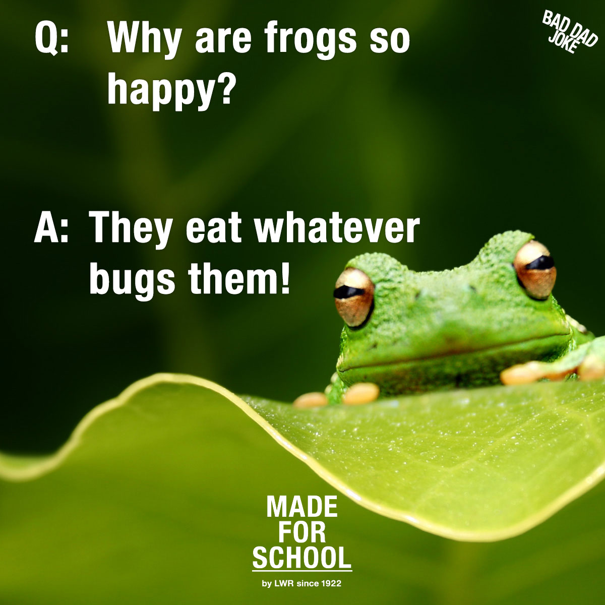 happy-frogs