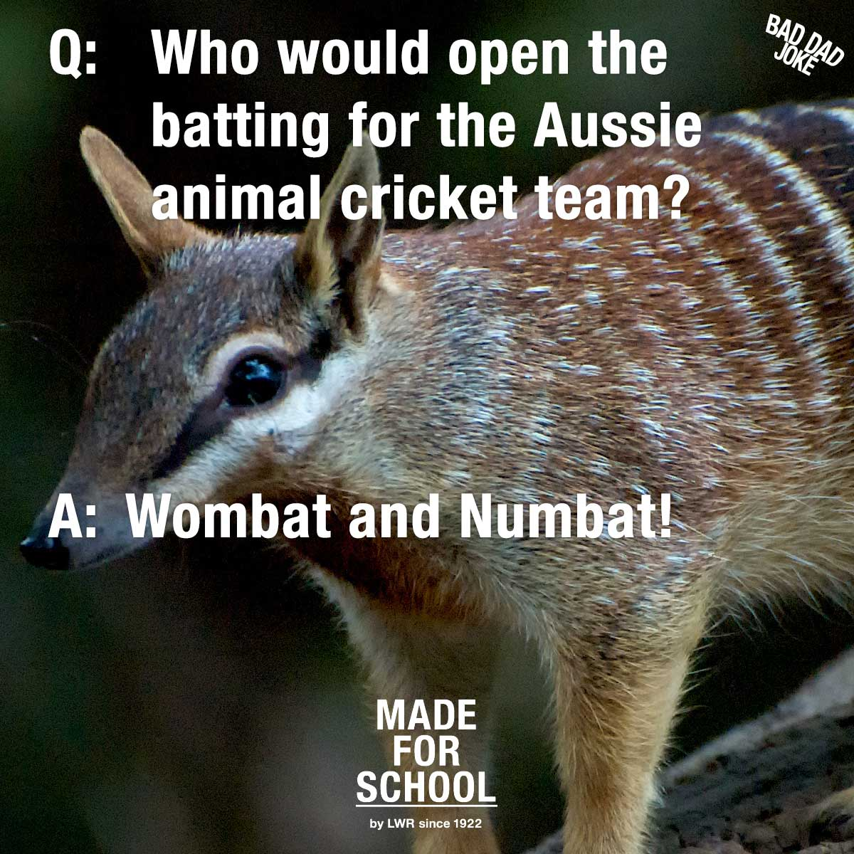 Aussie Animal Cricketers