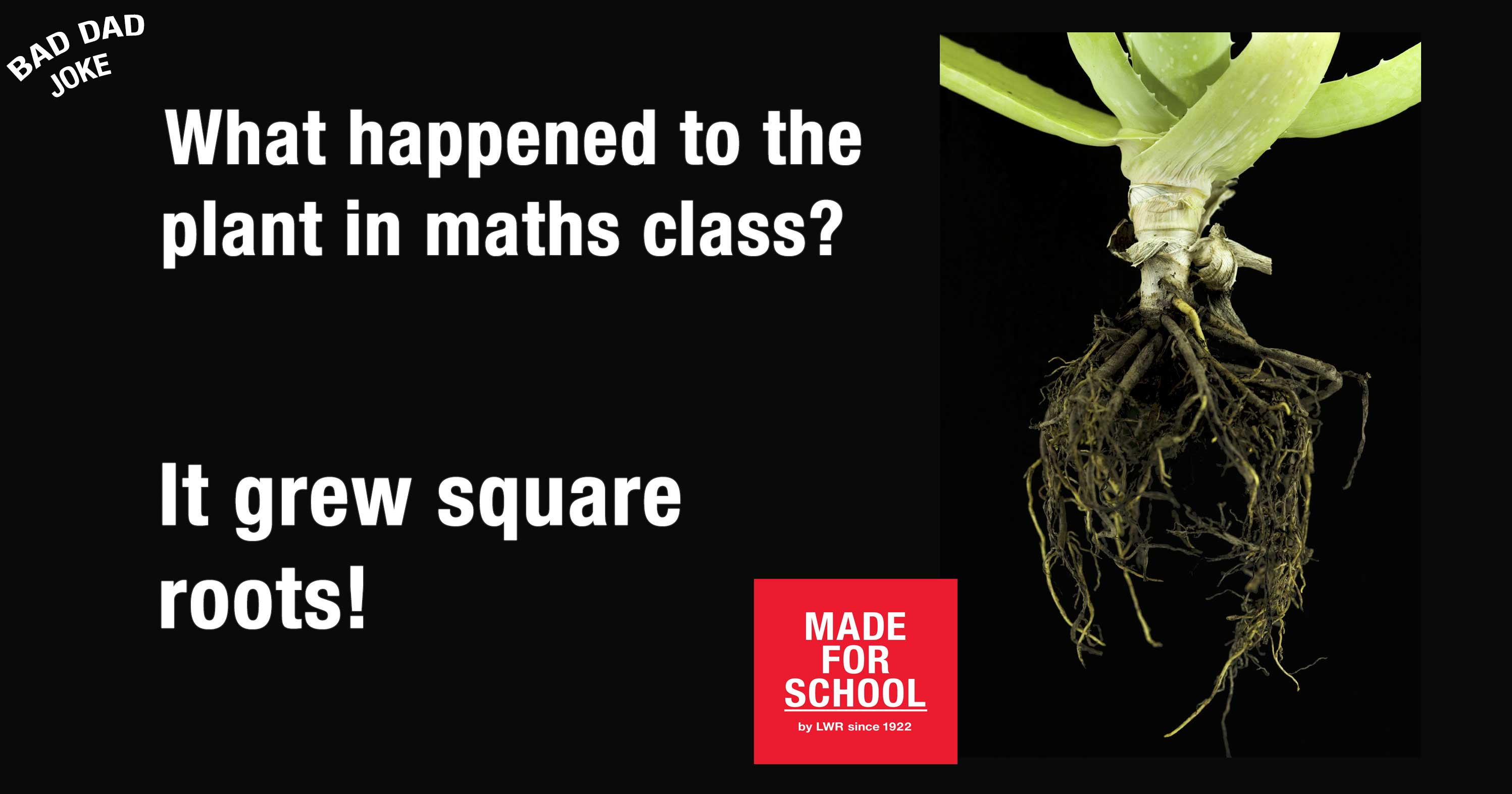 Maths Plant
