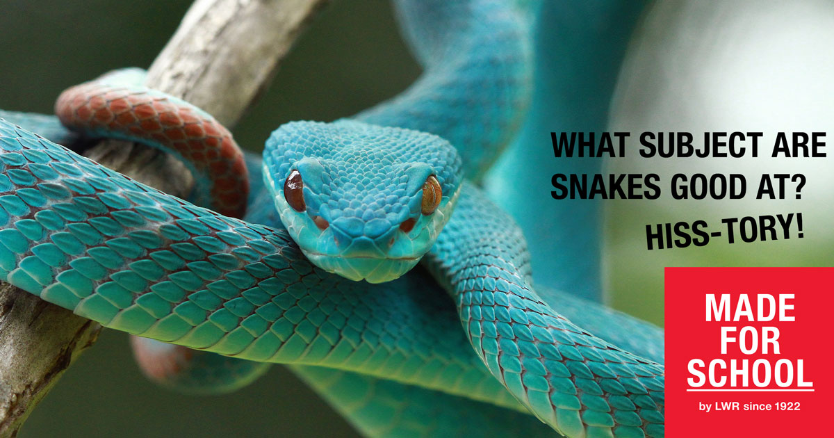 BAD DAD JOKES: Smart Snakes