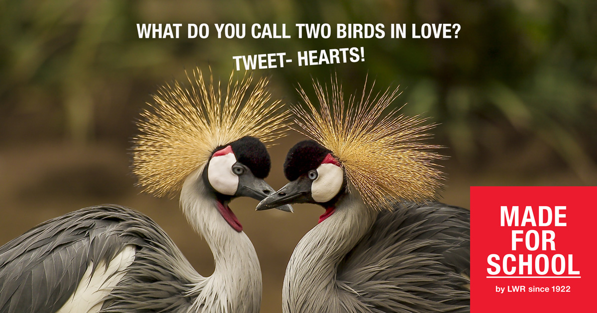 BAD DAD JOKE: LOVE BIRDS